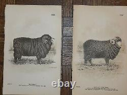 Authentic Antique 19th Century Sheep Lithographs- Set of 15
