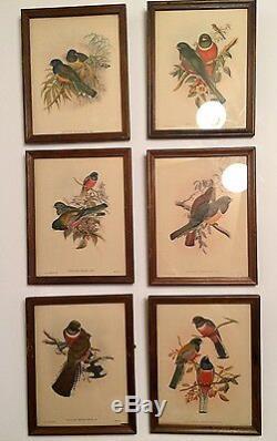 Set Of 6 J Gould & H C Richter Lithograph Birds Trogon Elegans Framed