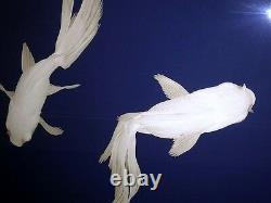 Set of 2 Contemporary Asian Zen Designer Blue Water White Koi Fish Art Prints