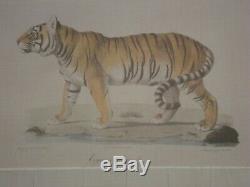 Set of Three JOHN RICHARD Framed Prints BIG CATS Lion Tiger Margay