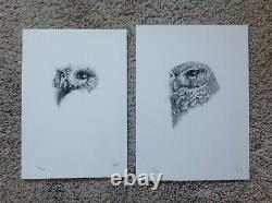 Vanessa Foley Little Owl Portrait Sketch Signed Fine Art SET Print Bird Bee